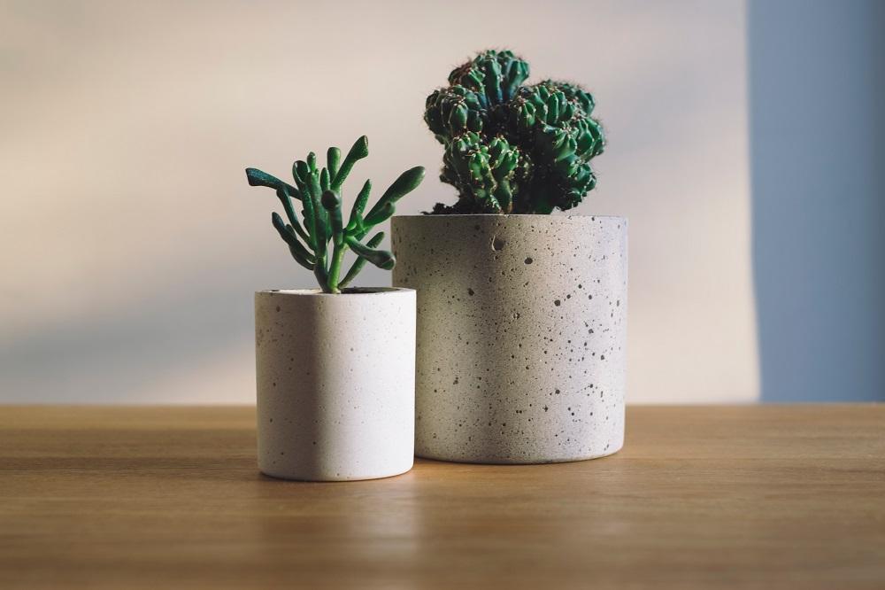 Kako da negujete sobne biljke tokom zime