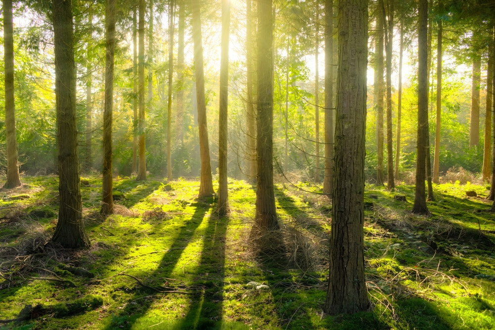Šuma – izvor snage je u prirodi