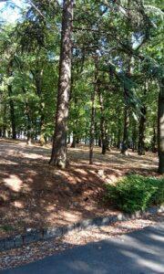 Oplenačka šuma